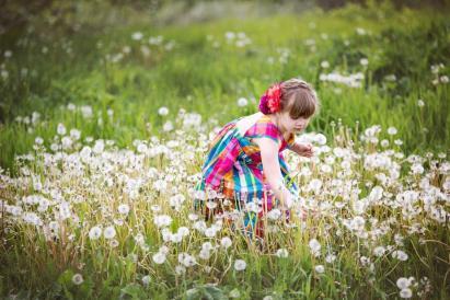 child-picking-dandelions-in-field